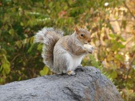 Squirrel by rlkitterman