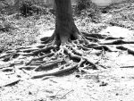 Tree Roots by Makingacross