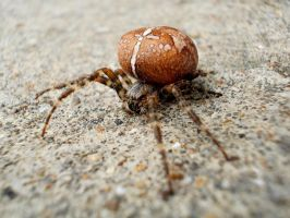 + Hey It's A Spider on the Road by Acethirn