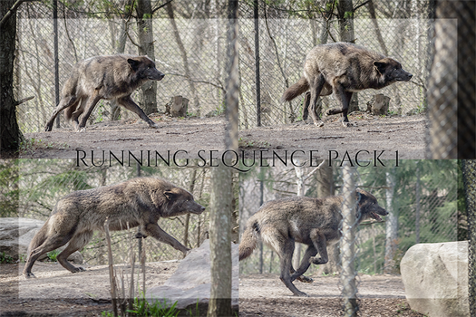 Running Wolf Sequence Stock Pack 1 by CastleGraphics