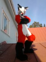 Fox on a roof by RaviTheBlueTiger