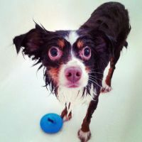 Bathtime for Copper by ShannonCPhotography