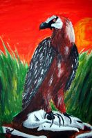 Bearded Vulture by 1996ds