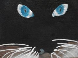 Cats Eyes by beauty-to-pain