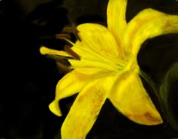 Yellow Daylily by masaad