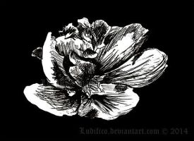 Dark Flower by Ludifico