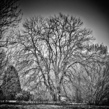 The Tree That Never Will Be by BenoitJWild