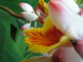 Hawaii: A Tropical Flower by BaronOfTheWillows