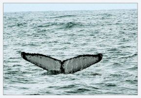 Whale Tail by humminggirl