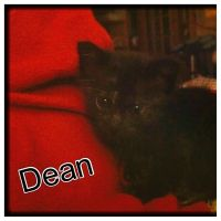 Dean Winchester the Kitty by NewGenerationArt7