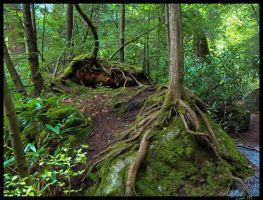 Forest Floor by Leah321