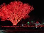 RED TREE WITH HOUSE IN BACKGROUND by KerensaW