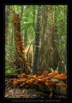 Eungella National Park, QLD by eehan