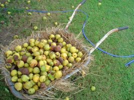 Pears in a Wheelbarrow by TheJollyMisanthrope