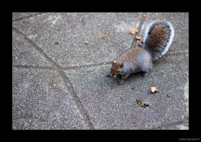 Squirrel 2 by AmbientExposures