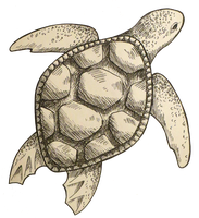 Turtle sketch by Fuugis