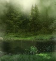 Misty Wood background by moonchild-ljilja