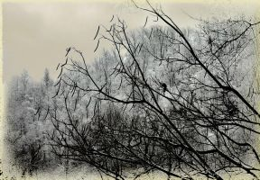 Bean Tree by TimLaSure