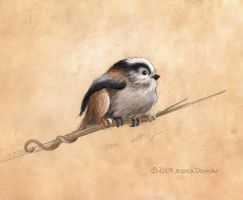 Titmouse gryph by JessicaMDouglas