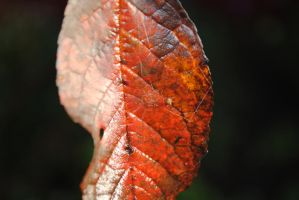 Leaf by EricaJaneLatham
