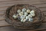 Nest Stock 02 by Malleni-Stock