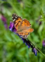 Butterfly season by kayaksailor