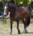 STOCK - 2014 Sep Tolly-42 by fillyrox