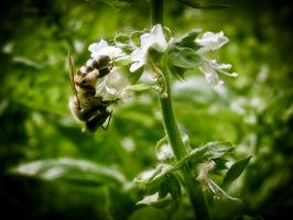 Bee lomo by TheSoftCollision