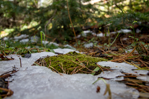 Moss Patch by oddmountain