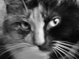 Cat in Black and White by LW-Lucy