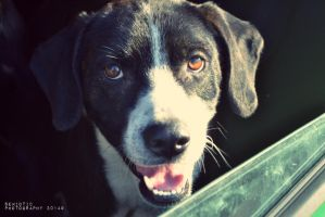 Champ by SemioticPhotography