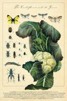 The Cauliflower and its Fauna by PaperSpiders