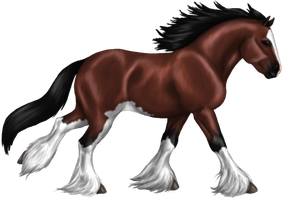 Quin: Clydesdale Stallion by SilvanonOfTheOrchard