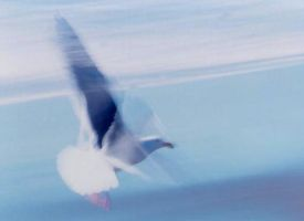 Johnathan Seagull by the-shutterbug
