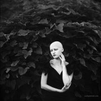 Black tree by NataliaCiobanu