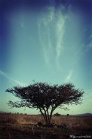 Tree and sky by blakewolff