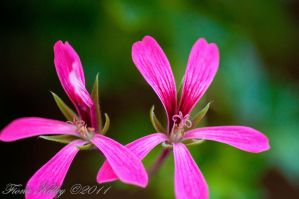 Pink Twins by WinterLover29