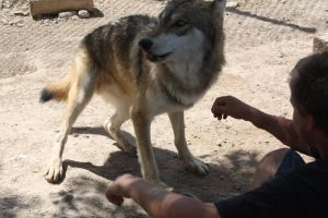Wolf Sanctuary 6 by sugarpoultry