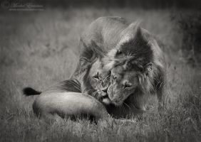 World Lion Day by MorkelErasmus