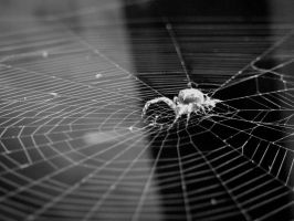 In the spiders web by RebeccaFB