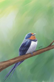 A swallow by hanna-Aris