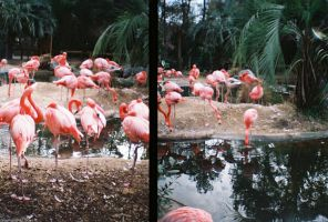 35mm Flamingos by onnawufei