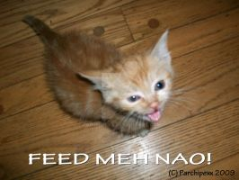 Feed Meh Nao by Parchipexx