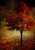 Autumn by JacqChristiaan