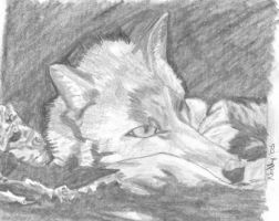 Fox Study 1 by JulepPony