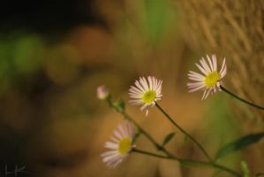 happy three friends by Lk-Photography