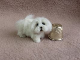 'Precious' lhasa X maltese dog now listed on ebay by squizzy7o7