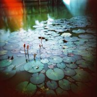 Lily Pond by: Ethermoon by lomography
