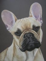 France Bulldog by mo62