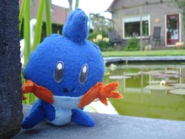 A wild Mudkip appeared! by NIGHTSandTAILSFAN
